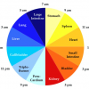 traditional chinese medicine body clock