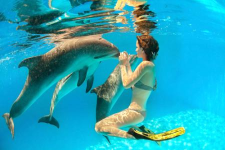 belinda farrell discusses swimming with the dolphins